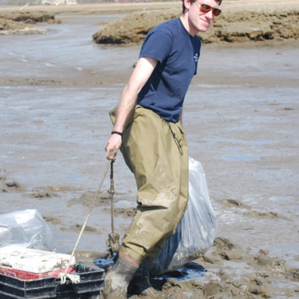 im Dubay in sticky mud near the upper intertidal at the Wells study site in May 2014 dragging the clams and plant pots to the next location.