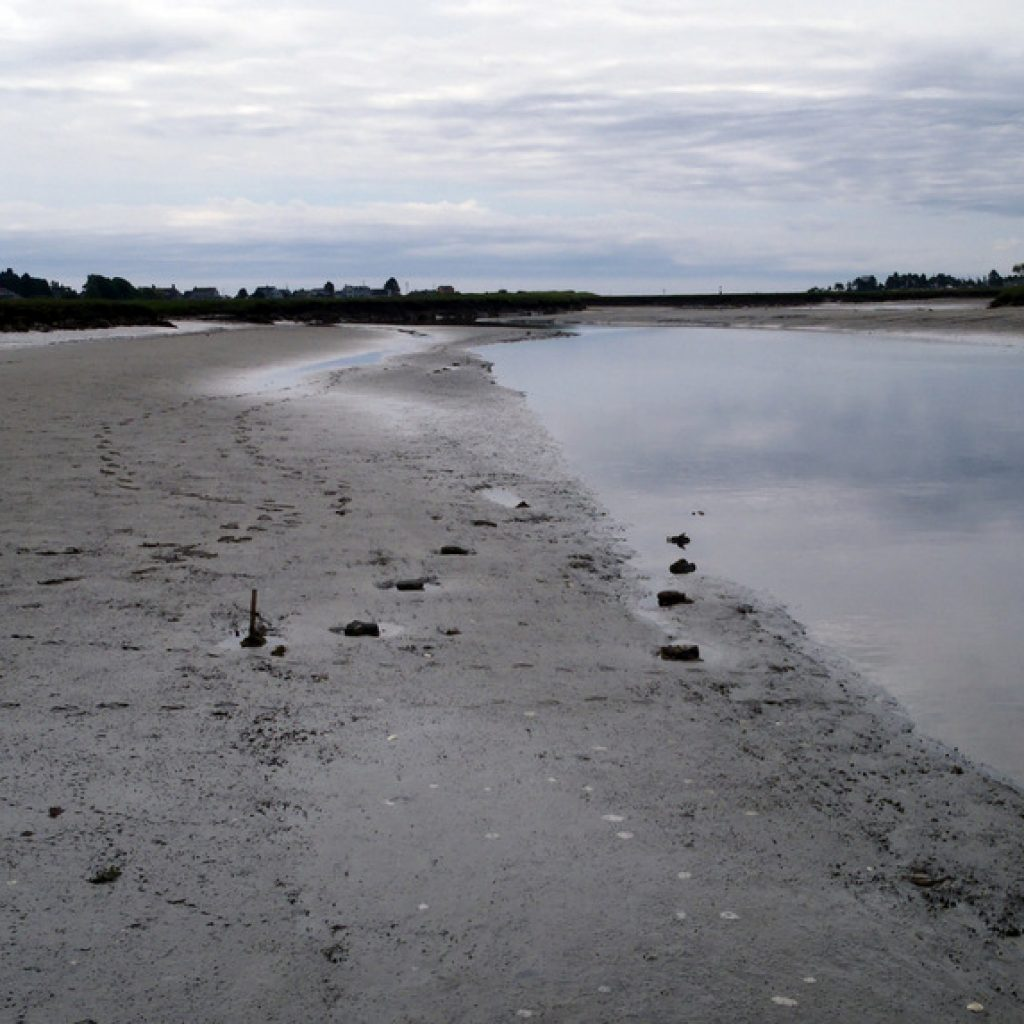 ome of the experimental units in the lower intertidal, however, became scoured or buried under 2-5 cm of sand in the lower intertidal blocks in the Webhannet River.