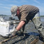 Placing seed in a 4-foot x 2-foot box at Staples Cove, Freeport, Maine (May 27, 2015)