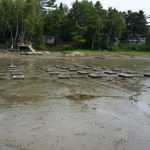 An array of 30 boxes at an intertidal flat in Freeport, Maine.