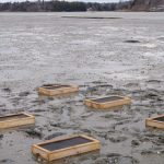 One experimental array of clam recruitment boxes in the Harraseeket River.