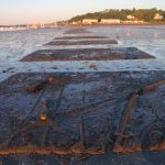 Predator netting to protect cultured clams at Collins Cove, Freeport, Maine (12 July 2014).
