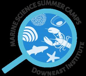 dei_summer_camp_web_medium
