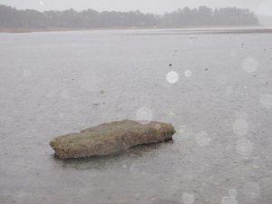 iece of salt marsh bank on a mudflat near Flying Point, Freeport, Maine (28 June 2013)