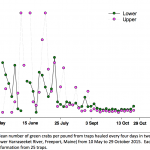 Mean number of green crabs per pound from traps hauled every four days in two locations (Upper vs. Lower Harraseeket River, Freeport, Maine) from 10 May to 29 October 2015. Each point represents information from 25 traps.