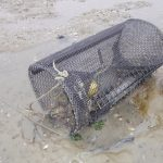 The Acer green crab trap used in all trapping studies (2013-2015).