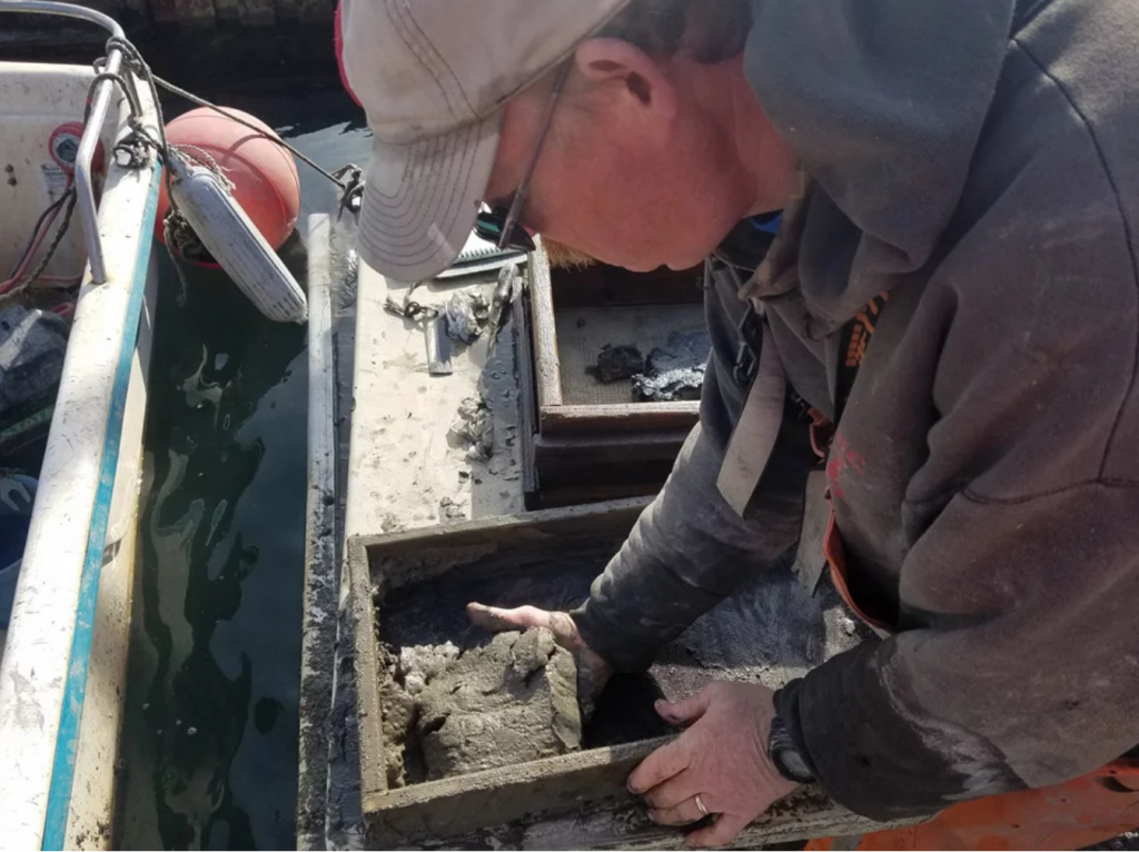 Brian Beal, the director of research at the Downeast Institute, scoops sediment out of a clam recruitment box as part of a five-month-long study to test the effects of clamming techniques. Photo courtesy of DEI.