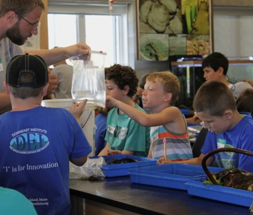 experiential education at Downeast Institute, marine science field station